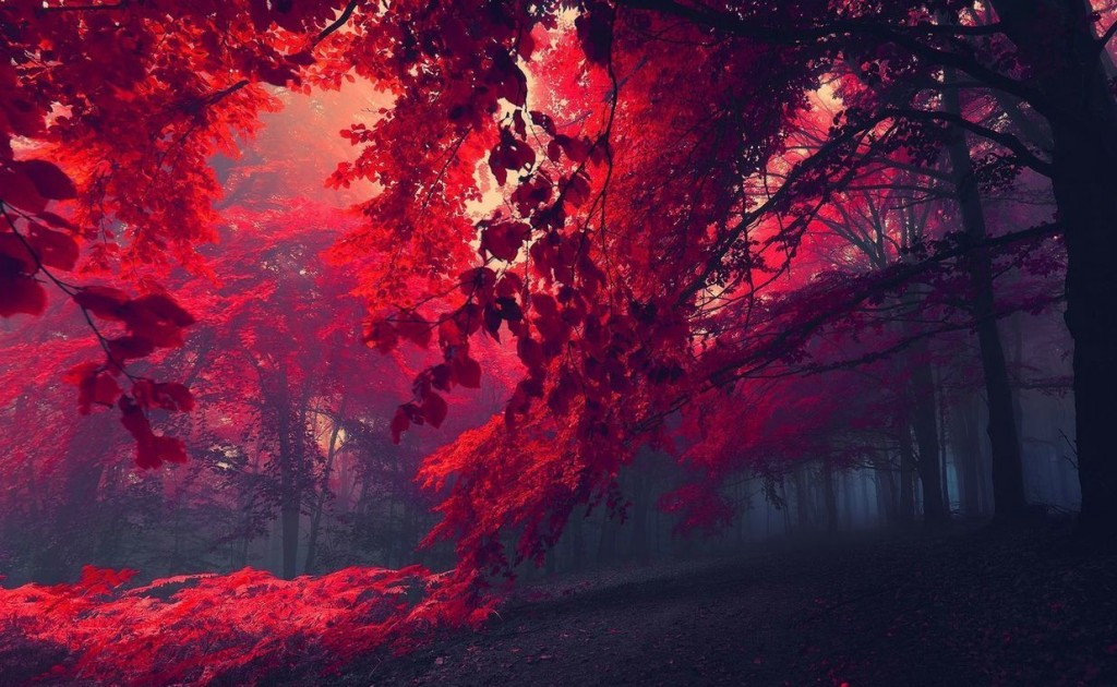 red-forest-26750-1366x768